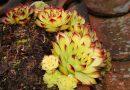 Tjera nesreću iz doma: Ova biljka štiti kuću od negativnih uticaja