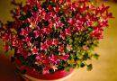 Najbolja prihrana za sobno cveće tokom zime: Lek za svaku saksiju (Video)