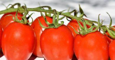 Odlučila je otkriti svoju tajnu: Ako poslušate ovaj savjet paradajz u vašoj bašti će nicati kao lud i biće preukusan